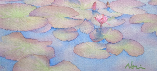 pinky-waterlily